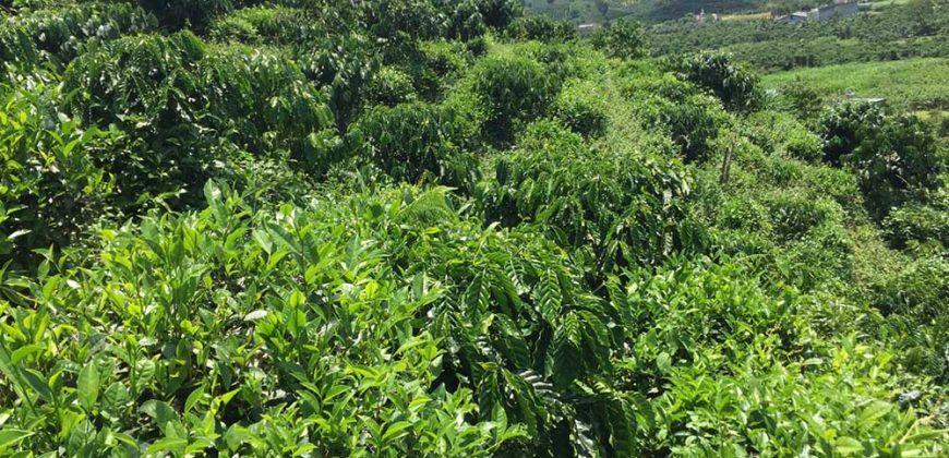 Bán 2 sào đất vườn tại xã Đại Lào, TP Bảo Lộc