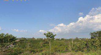 Cần bán đất tại Lê Phụng Hiểu, phường Lộc Tiến, Thành phố Bảo Lộc