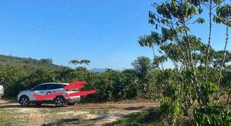Bán lô đất đường Đinh Công Tráng Xã Lộc Châu Tp Bảo Lộc
