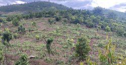 Bán lô đất 500m2 view săn mây tại thôn 6, xã Đại Lào