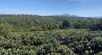 Bán đất vườn tại thôn 1 xã Lộc An, huyện Bảo Lâm