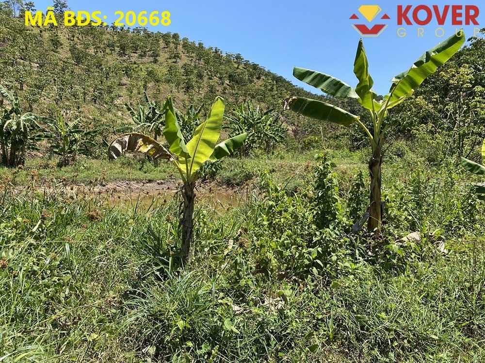 Bán đất đồi tại thôn 10, xã Đại Lào, Tp Bảo Lộc