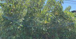 Bán lô đất 10x19m mặt tiền đường Nguyễn Văn Cừ, phường Lộc Sơn, Tp Bảo Lộc