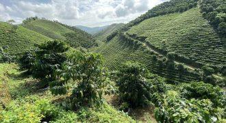 Bán đất đồi 5900m2 tại xã Đại Lào, Thành phố Bảo Lộc