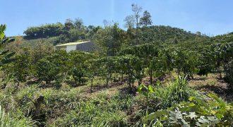 Cần bán lô đất 14000m2 tại Thôn 7, xã Đại Lào