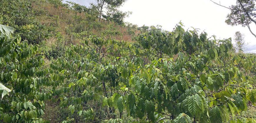 Bán lô đất 3700m2 tại thôn 6, xã Đại Lào