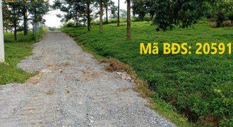 Bán lô đất 3224m2 đường Lê Thị Riêng, Lộc Châu, Bảo Lộc