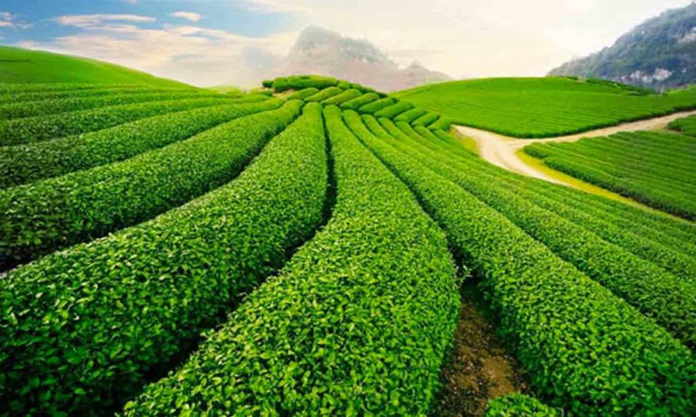 Kover Group - Địa chỉ bán đất nông nghiệp huyện Bảo Lộc uy tín