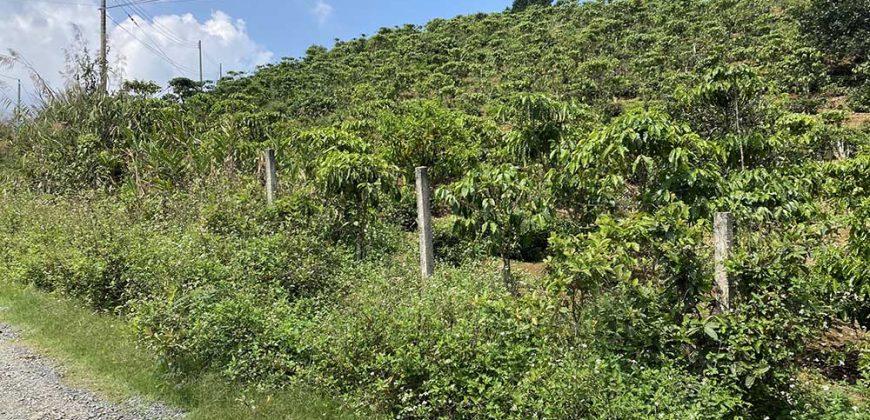 Bán 2600m2 đất trồng trà tại thôn 6, xã Đại Lào