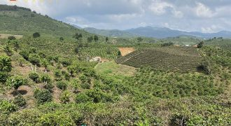 Bán 1700m2 đất tại thôn 6, xã Đại Lào, Bảo Lộc