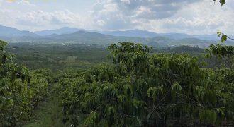 Bán 4000m2 đất hẻm Đinh Công Tráng, xã Đại Lào
