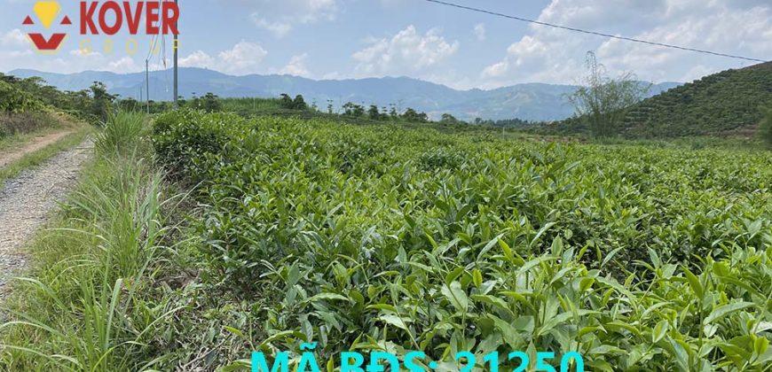 Bán 9000m2 đất tại Thôn 8, xã Đại Lào