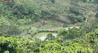 Bán 2800m2 đất view săn mây thôn 6, xã Đại Lào