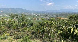 Bán 10900m2 đất tại thôn 6, xã Đại Lào