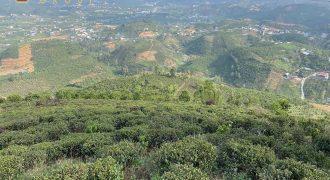 Bán 2600m2 đất view săn mây thôn 6, xã Đại Lào