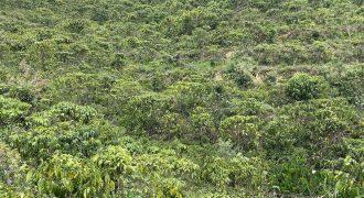 Bán 23000m2 đất tại thôn 10C, xã Lộc Thành
