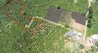Bán đất vườn thôn 16, xã Lộc Thành, huyện Bảo Lâm