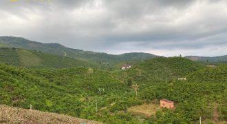 Bán lô đất 7000m2 xã Đại Lào, Thành phố Bảo Lộc giá rẻ