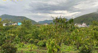Bán lô đất nở hậu đường Đinh Công Tráng, xã Lộc Châu giá rẻ