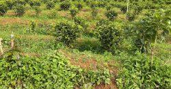 Bán lô đất 2000m2 xã Lộc An view đẹp, tiện ích đầy đủ