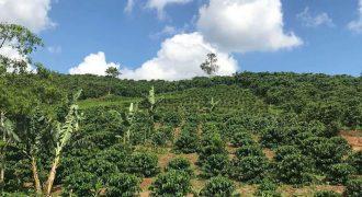 Bán lô đất triền đồi đẹp 5186m2 xã Lộc An, huyện Bảo Lâm giá rẻ