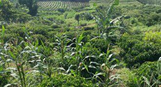 Bán lô đất 6100m2 xã Lộc An, huyện Bảo Lâm có suối tự nhiên