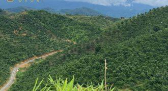 Bán lô đất 28000m2 xã Đại Lào, Thành phố Bảo Lộc view săn mây đẹp