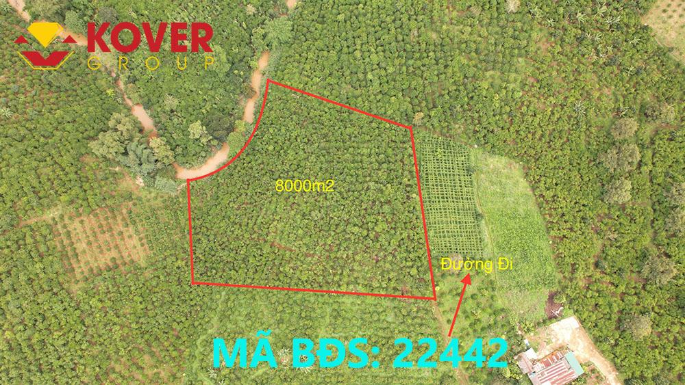 Vị trí lô đất 8000m2 xã Lộc An đang bán