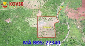 Bán lô đất 13000m2 full thổ cư Thành phố Bảo Lộc