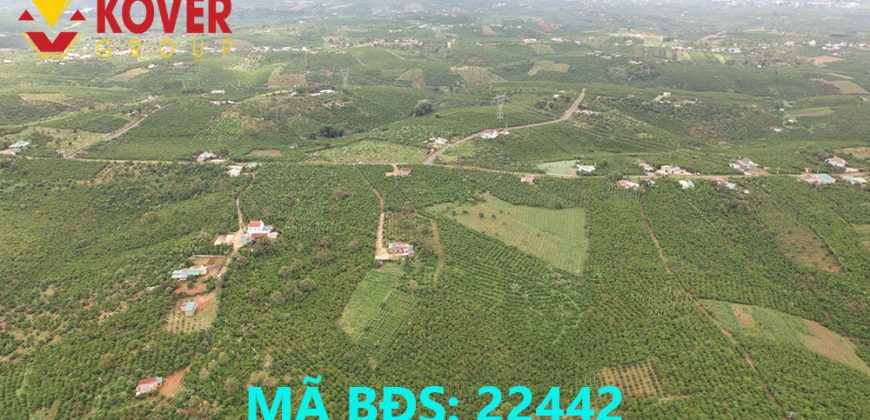 Bán lô đất thổ cư, view đồi 8000m2 xã Lộc An, huyện Bảo Lâm