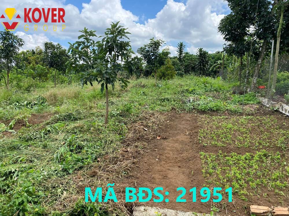 Lô đất 19x50m xã Lộc An đang bán giá rẻ