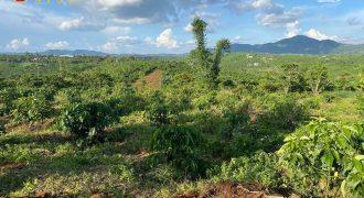 Bán lô đất mặt tiền view đẹp xã Lộc An, huyện Bảo Lâm giá rẻ