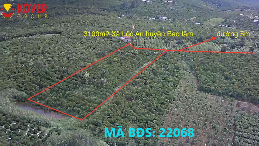 Lô đất 3100m2 xã Lộc An đang bán