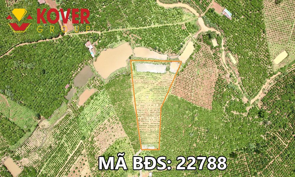 Vị trí lô đất 6500m2 xã Lộc An đang bán