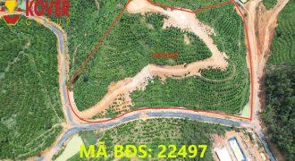 Bán lô đất 14000m2 view đồi xã Đại Lào, Thành phố Bảo Lộc