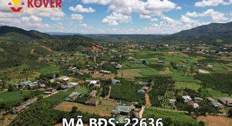 Bán lô đất vườn có sổ sẵn 2000m2 xã Đại Lào, Bảo Lộc