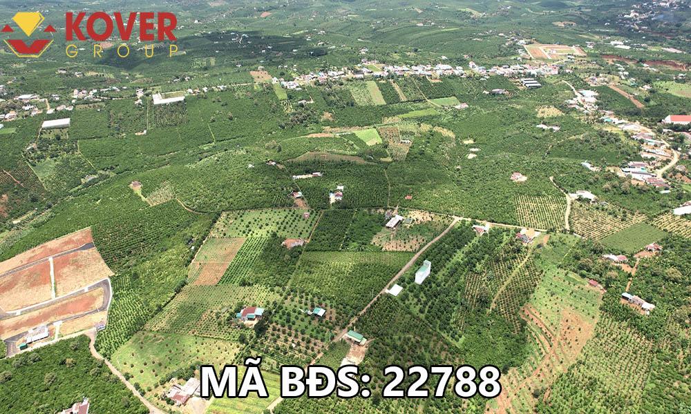 Bán lô đất vườn xã Lộc An, huyện Bảo Lâm giá rẻ