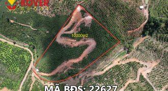 Bán lô đất 10000m2 xã Đại Lào, Bảo Lộc giá rẻ