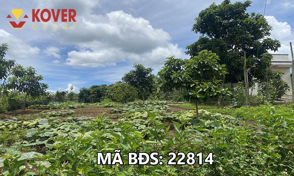 Bán lô đất vườn đã có sẵn sổ xã Lộc An, huyện Bảo Lâm