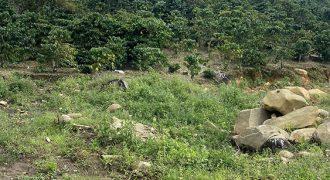 Bán 1.000m2 đất vườn tại thôn 7, xã Đại Lào, TP. Bảo Lộc
