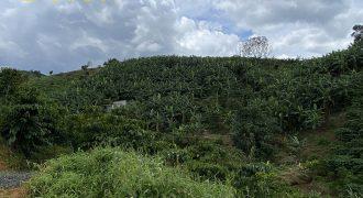 Bán đất có 50m mặt tiền đường xã Lộc Đức, huyện Bảo Lâm
