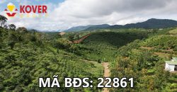 Bán lô đất vườn 35mx45m full thổ cư xã Đại Lào, Thành phố Bảo Lộc