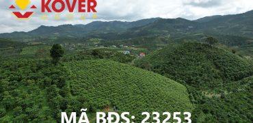 Bán 2200m2 đất thôn 11, xã Đại Lào, Thành phố Bảo Lộc